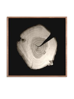 Framed Tree Rings Photograph