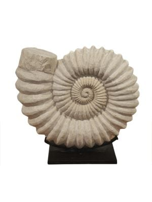"Image of Hand-carved sandstone shell set on a steel stand.13""DIA. Sandstone. Spot clean. Imported."