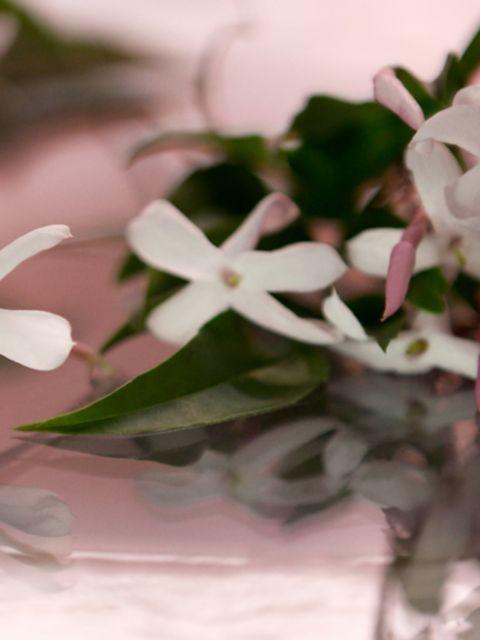 Gucci Bloom For Her Fragrance   SaksFifthAvenue
